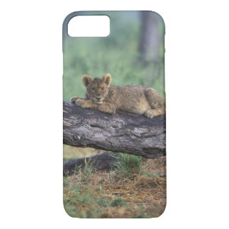 Botswana, Moremi Game Reserve, Lion cub iPhone 8/7 Case