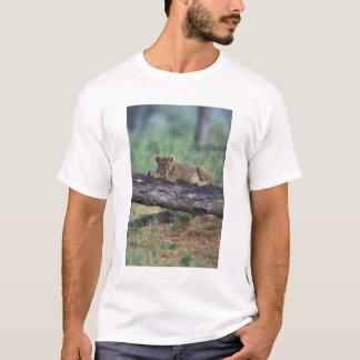 Botswana, Moremi Game Reserve, Lion cub T-Shirt