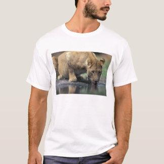 Botswana, Moremi Game Reserve, Lioness (Panthera 2 T-Shirt