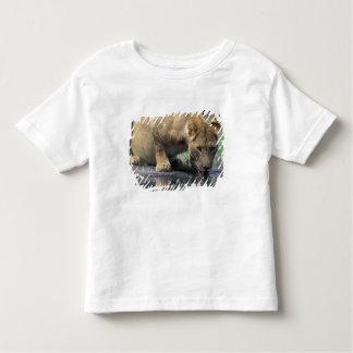 Botswana, Moremi Game Reserve, Lioness (Panthera 2 Toddler T-Shirt