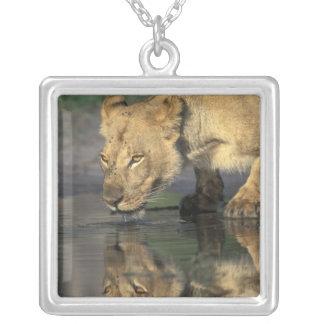 Botswana, Moremi Game Reserve, Lioness (Panthera Square Pendant Necklace