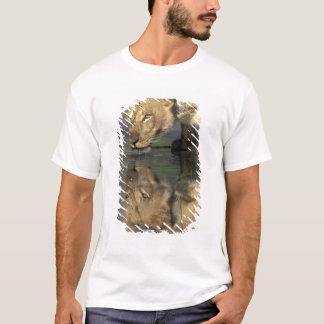 Botswana, Moremi Game Reserve, Lioness (Panthera T-Shirt