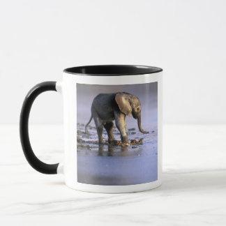 Botswana, Moremi Game Reserve, Young Elephant Mug