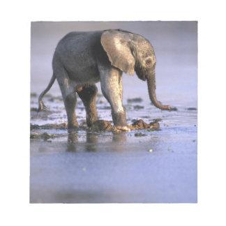 Botswana, Moremi Game Reserve, Young Elephant Notepad