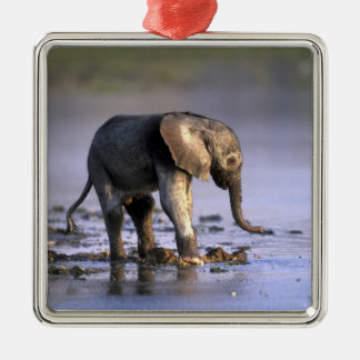 Botswana, Moremi Game Reserve, Young Elephant Silver-Colored Square Decoration