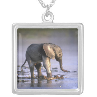Botswana, Moremi Game Reserve, Young Elephant Silver Plated Necklace
