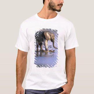 Botswana, Moremi Game Reserve, Young Elephant T-Shirt