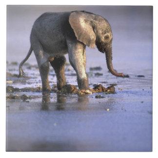 Botswana, Moremi Game Reserve, Young Elephant Tile