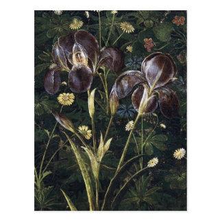 Botticelli Irises Postcard