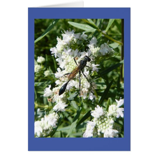 Bottle Wasp on Mountain Mint Blank Note Card
