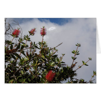 Bottlebrush Tree in Bloom Greeting Card