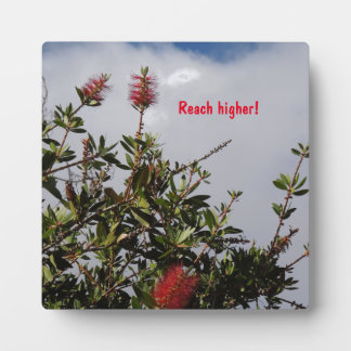Bottlebrush Tree in Bloom Photo Plaques