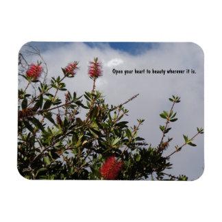 Bottlebrush Tree in Bloom Rectangular Photo Magnet