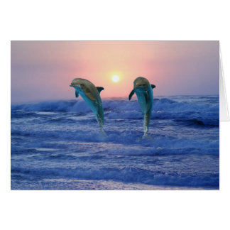 Bottlenose Dolphin at sunrise Card