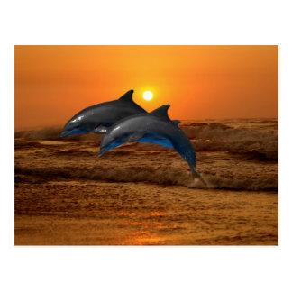 Bottlenose Dolphin at Sunset Postcard
