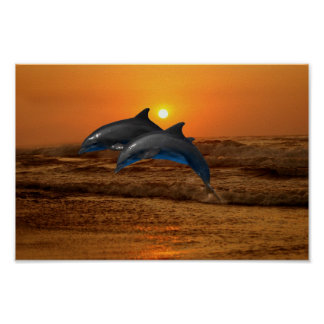 Bottlenose Dolphin at Sunset Poster