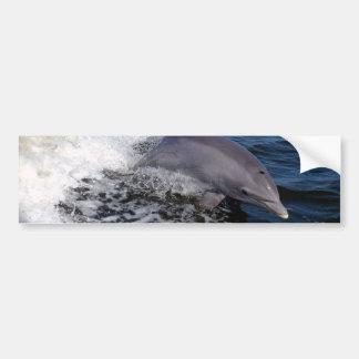Bottlenose Dolphin Bumper Sticker