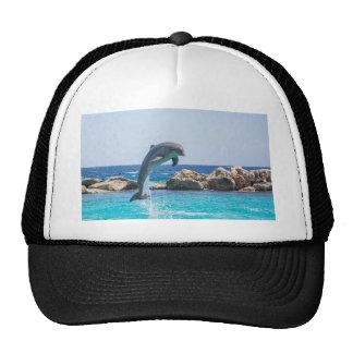 Bottlenose Dolphin Cap