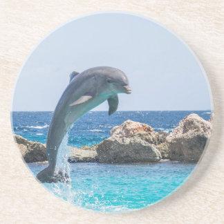 Bottlenose Dolphin Coaster