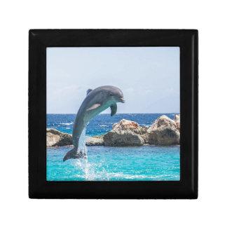 Bottlenose Dolphin Gift Box