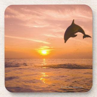 Bottlenose Dolphin jumping 2 Coaster
