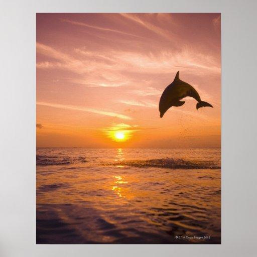 Bottlenose Dolphin jumping 2 Print
