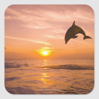Bottlenose Dolphin jumping 2 Square Sticker