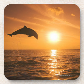 Bottlenose Dolphin jumping Coasters