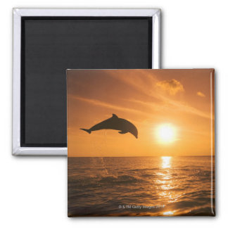 Bottlenose Dolphin jumping Magnet