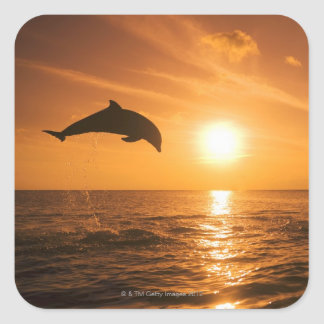 Bottlenose Dolphin jumping Square Sticker