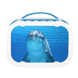 Bottlenose Dolphin looks at the camera under water Lunchbox