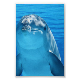 Bottlenose Dolphin looks at the camera under water Poster