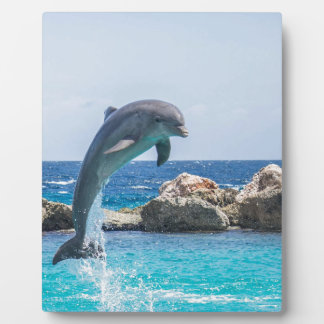 Bottlenose Dolphin Plaque