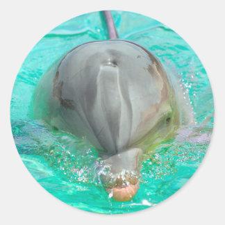Bottlenose dolphin round sticker