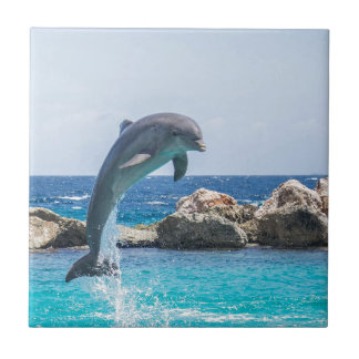 Bottlenose Dolphin Small Square Tile