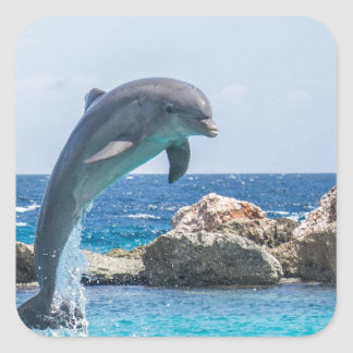 Bottlenose Dolphin Square Sticker
