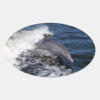 Bottlenose Dolphin Oval Sticker
