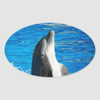 Bottlenose Dolphin Oval Stickers