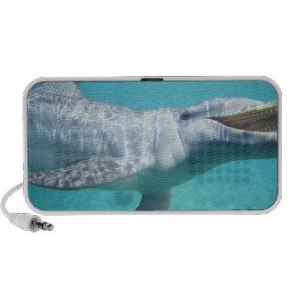 Bottlenose Dolphin Tursiops truncatus), 2 Speaker System