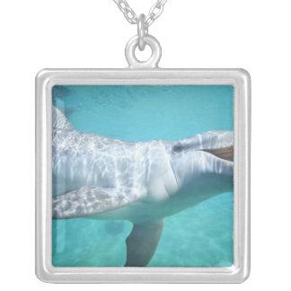 Bottlenose Dolphin Tursiops truncatus), 2 Square Pendant Necklace