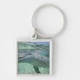 Bottlenose Dolphin Tursiops truncatus), 3 Key Ring