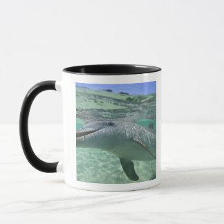 Bottlenose Dolphin Tursiops truncatus), 3 Mug
