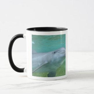 Bottlenose Dolphin Tursiops truncatus), Mug