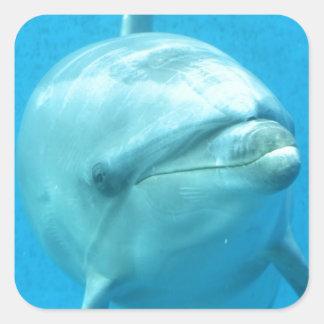 Bottlenose Dolphin Underwater Stickers