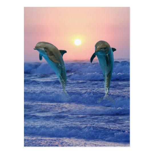 Bottlenose Dolphins at sunrise Postcard
