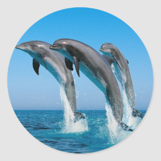 bottlenose dolphins jumping out of clear blue sea round sticker