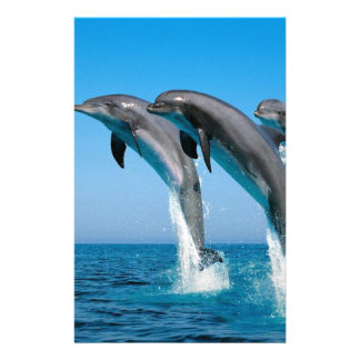 bottlenose dolphins jumping out of clear blue sea stationery