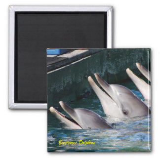 Bottlenose Dolphins Magnet