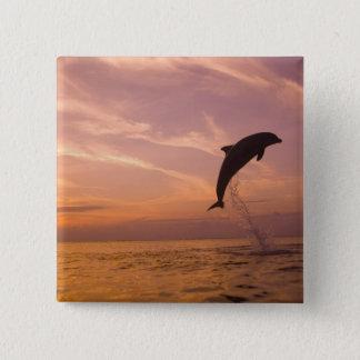Bottlenose Dolphins Tursiops truncatus) 10 15 Cm Square Badge