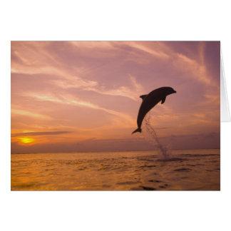 Bottlenose Dolphins Tursiops truncatus) 10 Card